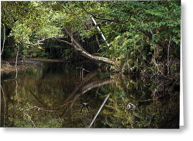 Tropical Rainforest Greeting Card by Martin Rietze
