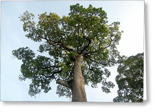 Tropical Rainforest Tree Greeting Card