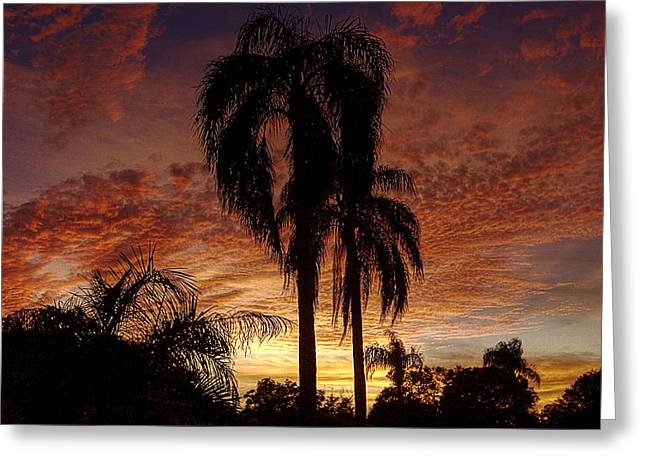 Tropical Sunset Greeting Card by Kandy Hurley