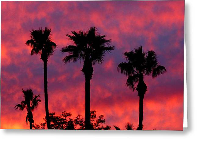 Tropical Sunset Greeting Card by Laurel Powell
