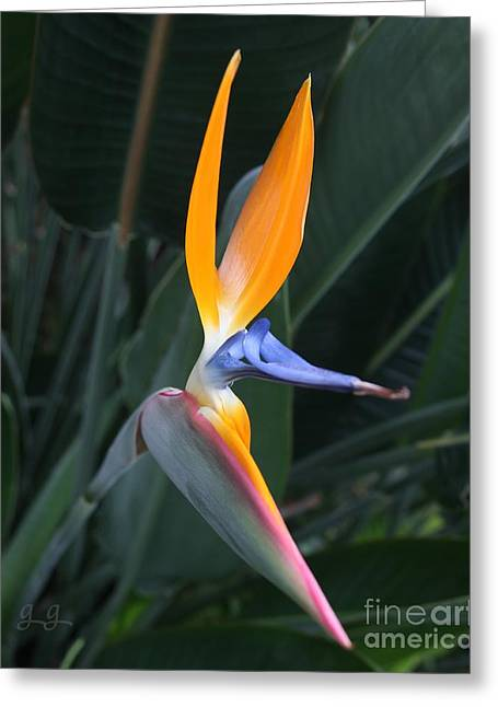 Tropical Touch Greeting Card by Geri Glavis