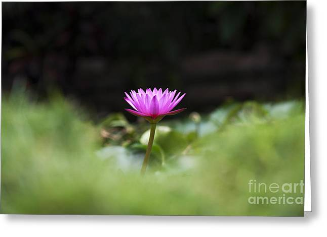 Tropical Water Lily Greeting Card by Tim Gainey