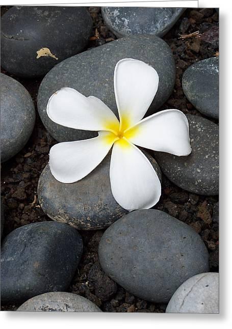 Tropical Zen Greeting Card by Sheri Van Wert