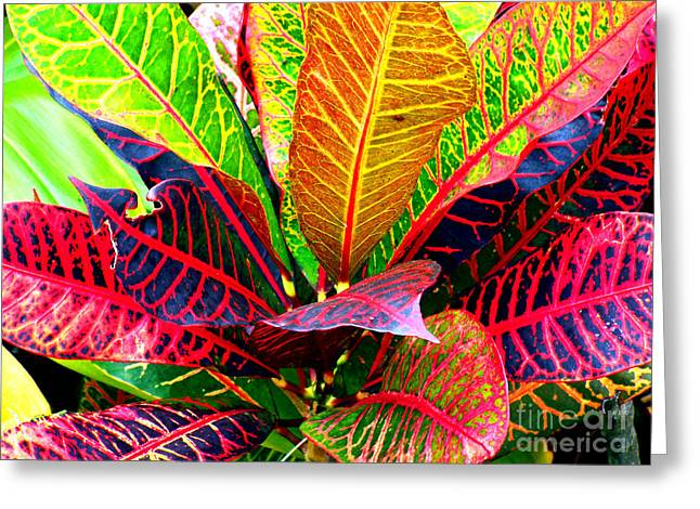 Tropicals Gone Wild Naturally Greeting Card by David Lawson