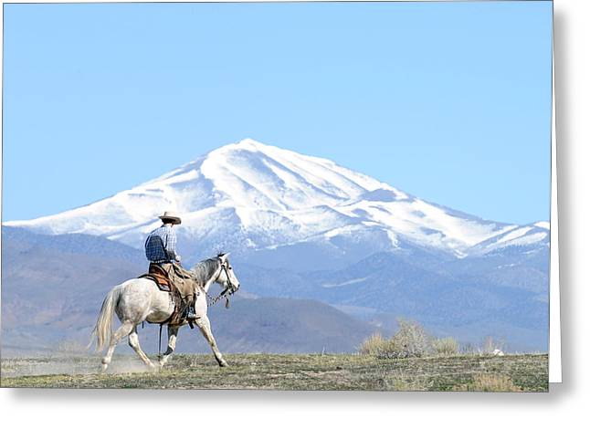 Trotting Out Greeting Card by Lee Raine