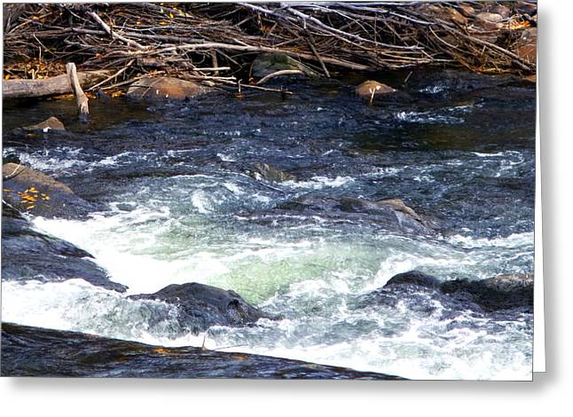 Greeting Card featuring the photograph Trout River by Jackie Carpenter