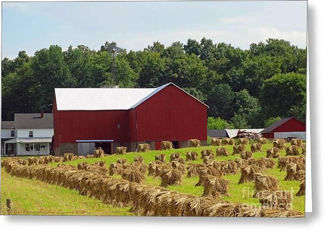 True Amish Farm Greeting Card