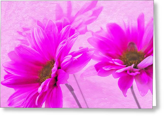 True Pink Greeting Card by Linda Segerson