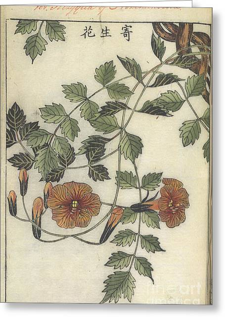 Trumpet Flower Greeting Card by British Library