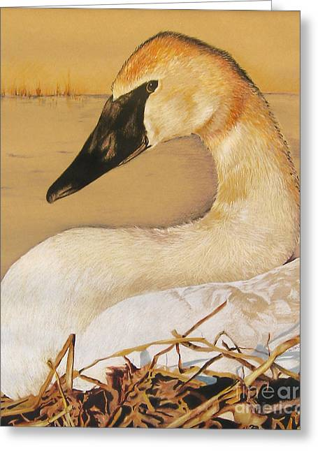 Sold Trumpeter Swan Greeting Card