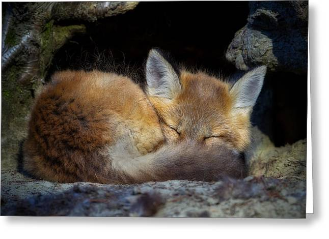 Fox Kit - Trust Greeting Card