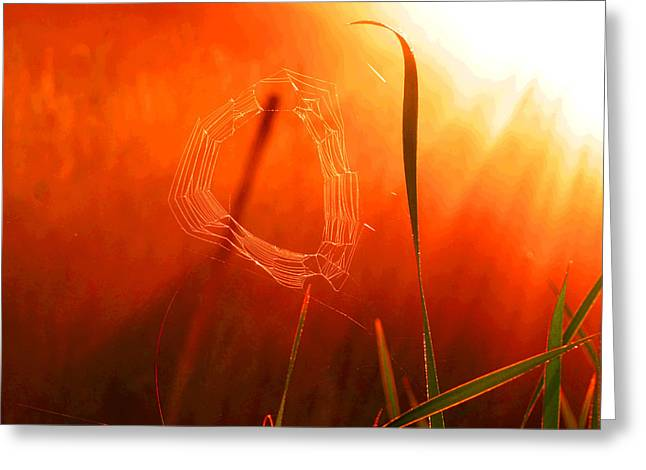 The Spider's Web In Golden Sunlight Greeting Card