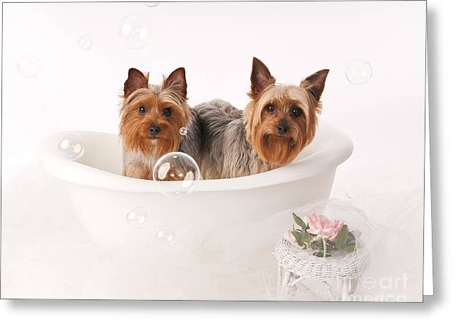Tubby Time Greeting Card