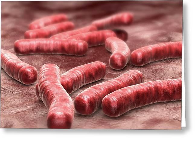 Tuberculosis Bacteria Greeting Card