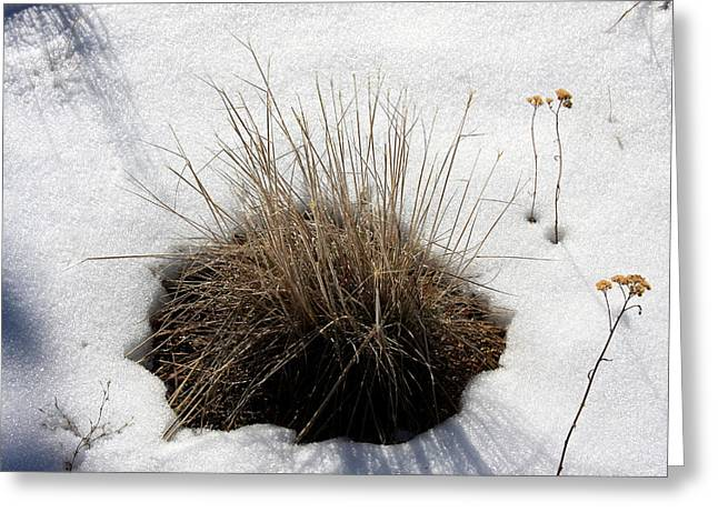 Greeting Card featuring the photograph Tucked In The Snow by Jennifer Muller