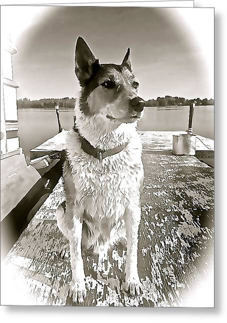Tucker's Tuesday Greeting Card by Danielle  Broussard