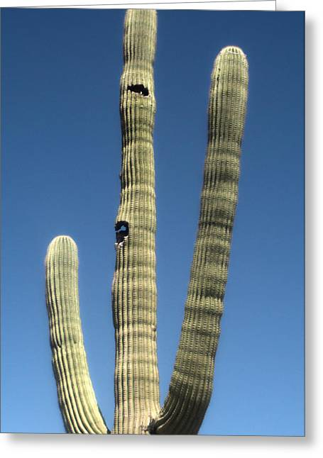 Tucson Arizona Cactus Greeting Card by Gregory Dyer