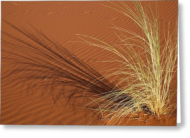 Tuft Of Grass Forms Shadow On Sand Greeting Card by Jaynes Gallery