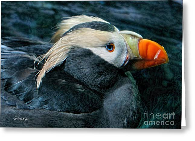 Tufted Puffin Profile Greeting Card