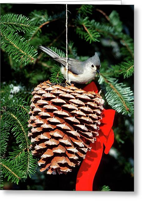 Tufted Titmouse (baeolophus Bicolor Greeting Card by Richard and Susan Day
