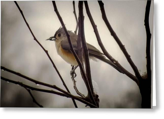 Tufted Titmouse Greeting Card by Karen Wiles
