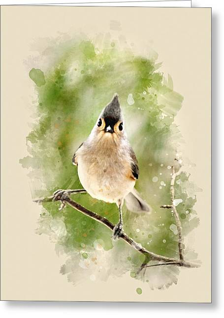 Tufted Titmouse - Watercolor Art Greeting Card by Christina Rollo