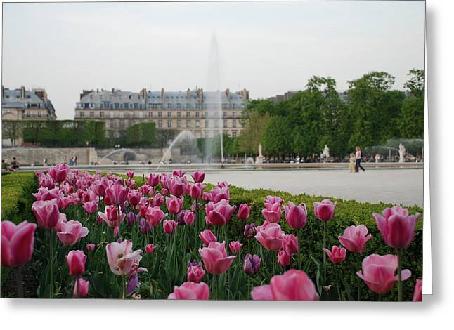Tuileries Garden In Bloom Greeting Card