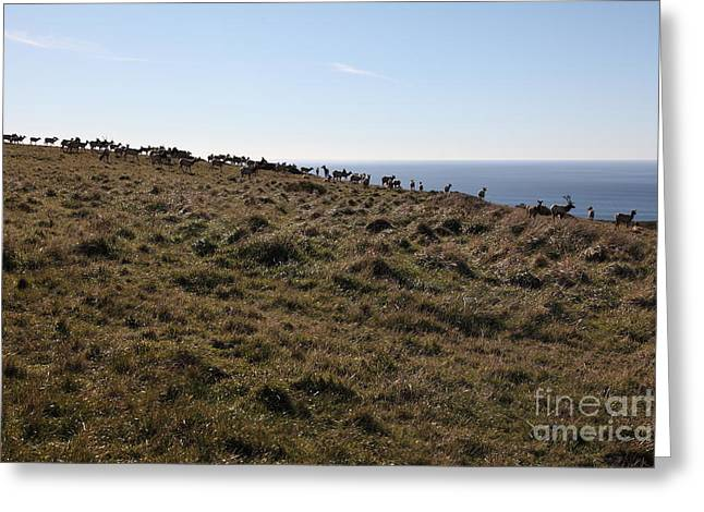 Tules Elks Of Tomales Bay California - 5d21276 Greeting Card by Wingsdomain Art and Photography