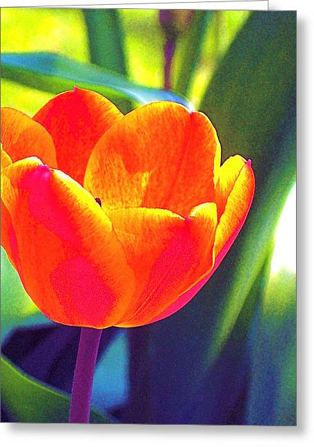Tulip 2 Greeting Card by Pamela Cooper