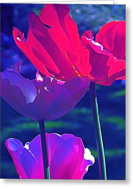 Tulip 3 Greeting Card by Pamela Cooper