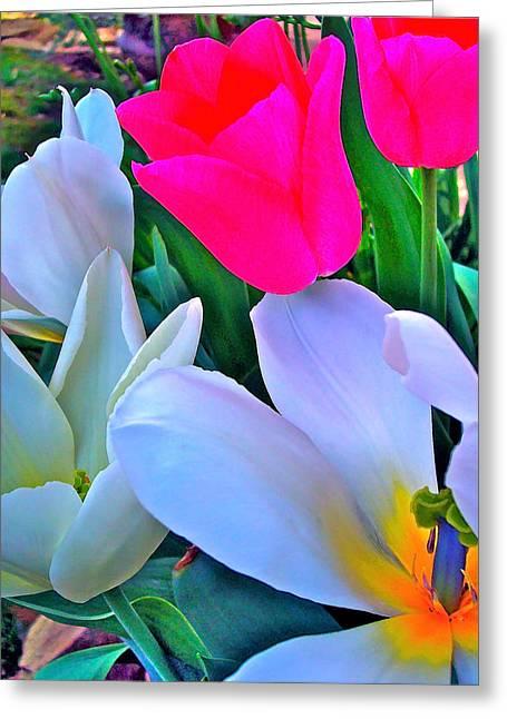 Tulip 35 Greeting Card by Pamela Cooper