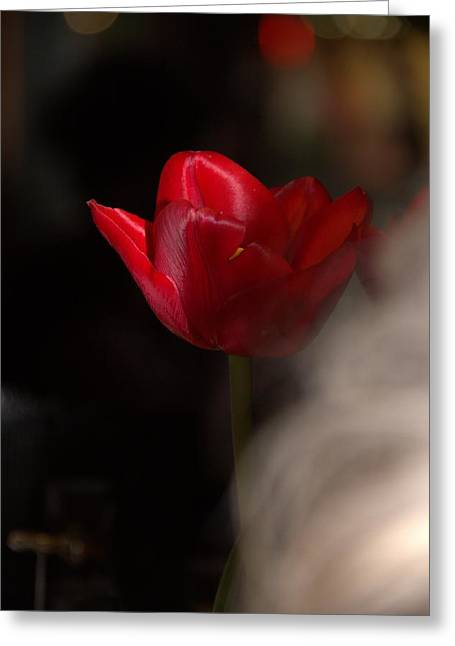 Tulip Greeting Card by A K Dayton