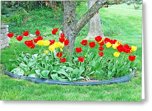 Tulip Bed Greeting Card by Aimee L Maher Photography and Art Visit ALMGallerydotcom