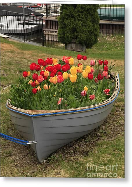 Tulip Boat Greeting Card
