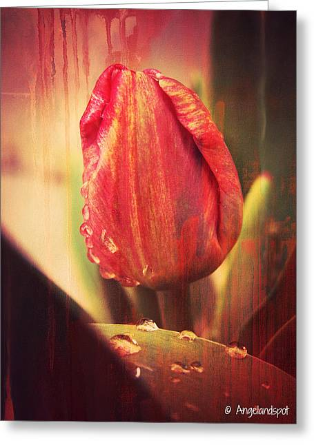 Tulip Greeting Card by Cassie Peters