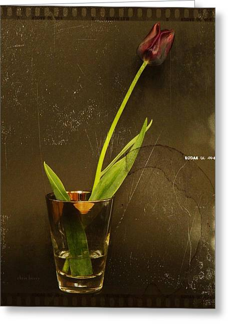 Tulip  Greeting Card by Chris Berry