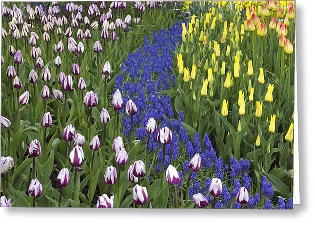 Tulip Design Greeting Card by Elvira Butler