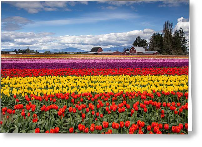Tulip Farm Greeting Card by Pierre Leclerc Photography