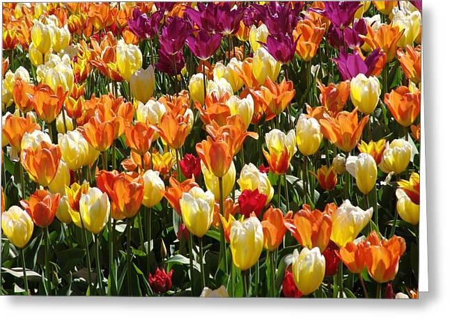Tulip-fest Greeting Card