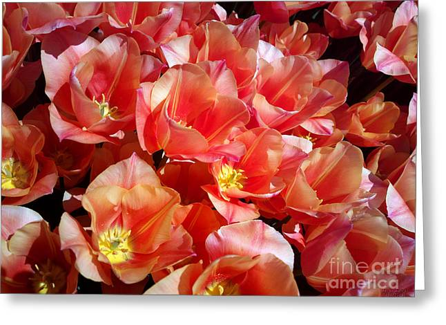 Tulip Festival - 39 Greeting Card