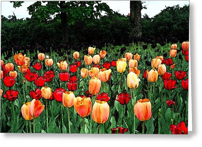 Greeting Card featuring the photograph Tulip Festival  by Zinvolle Art