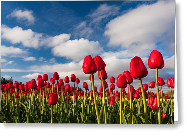 Tulip Field Greeting Card by Matt Dobson