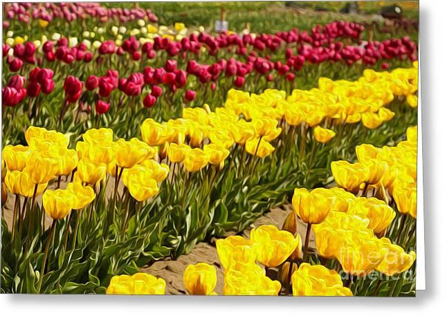 Tulip Field Greeting Card by Nur Roy