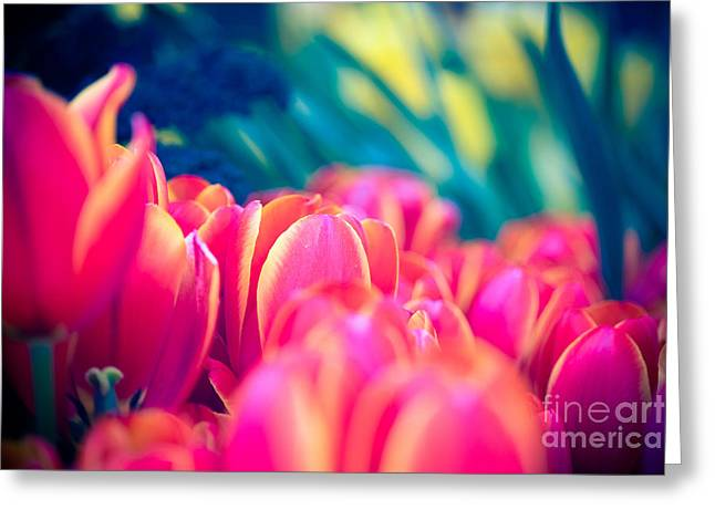 Tulip Fields In Blu Greeting Card