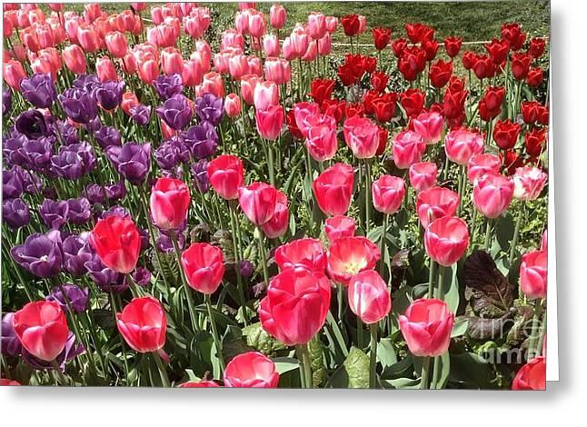 Tulip Garden 2 Greeting Card