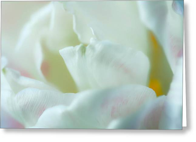 Greeting Card featuring the photograph Tulip by Jonathan Nguyen