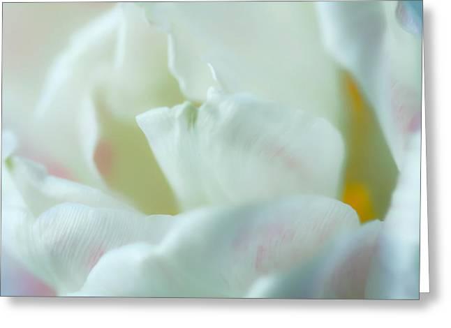 Tulip Greeting Card by Jonathan Nguyen