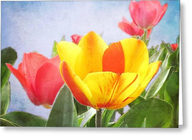Tulip Joy Greeting Card