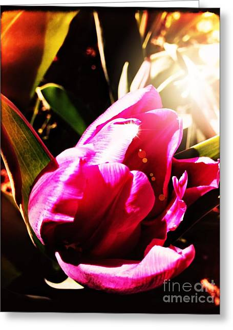 Greeting Card featuring the photograph Tulip by Leslie Hunziker