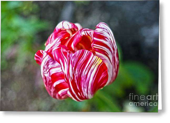Tulip Greeting Card by Nur Roy